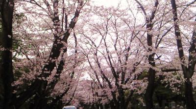 Aoayama3